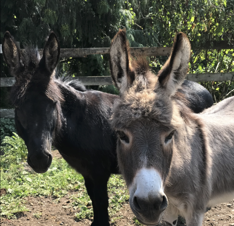 Daisy & Keno – Adopted!